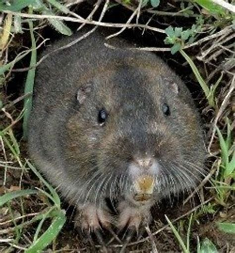 common backyard animals pests in the back yard an introduction to garden rodents