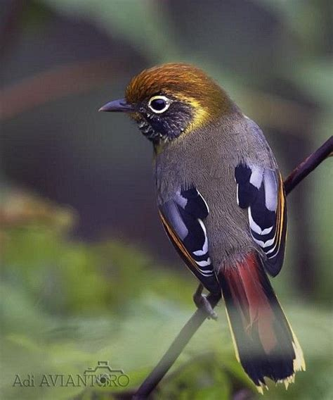1000 images about birds of a feather on pinterest