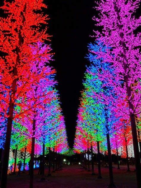 christmas trees picmia