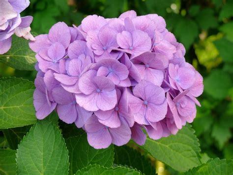 imagenes de flores naturales bonitas las 15 flores m 225 s bonitas con fotos 174 florespedia