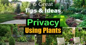 Recovery Flowers - 6 great tips and ideas to create privacy using plants