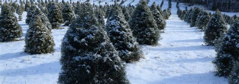 gallery of christmas tree farms in kansas fabulous homes