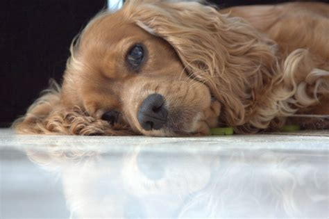 places that allow dogs friendly places in dubai dubai expats guide