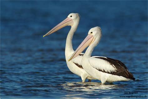 Go Design by Australian Pelican
