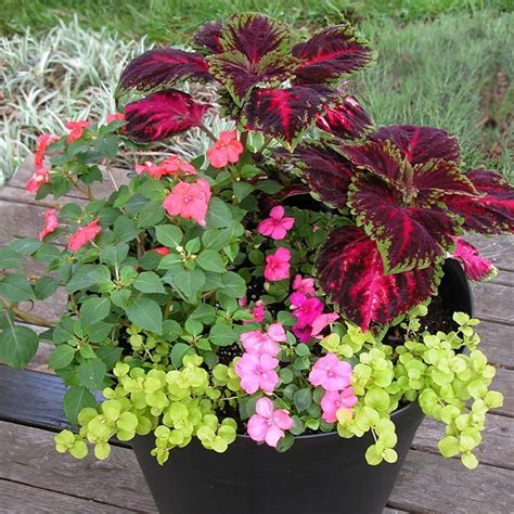shade garden container ideas photograph shade container of