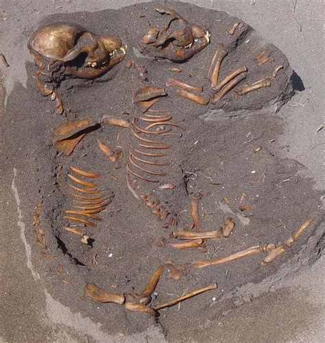 origin of dogs bones reveal ecological history of california s channel islands smithsonian insider
