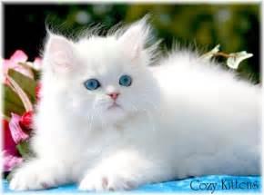 beautiful kittens beautiful cats images beautiful cool wallpapers