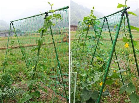 Netting For Climbing Plants - climbing plant nylon supporting netting garden vegetable fruit vines support mesh at banggood