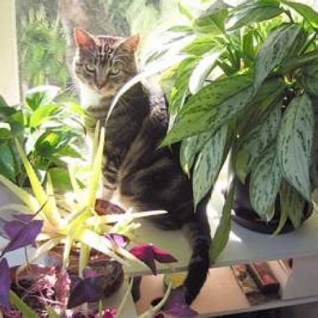 pictures of house plants poisonous to cats plants and foods that are poisonous to cats catster health and safety tips
