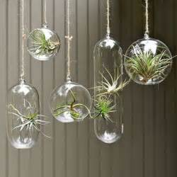 Hanging Plant Pots Shane Powers Hanging Glass Collection