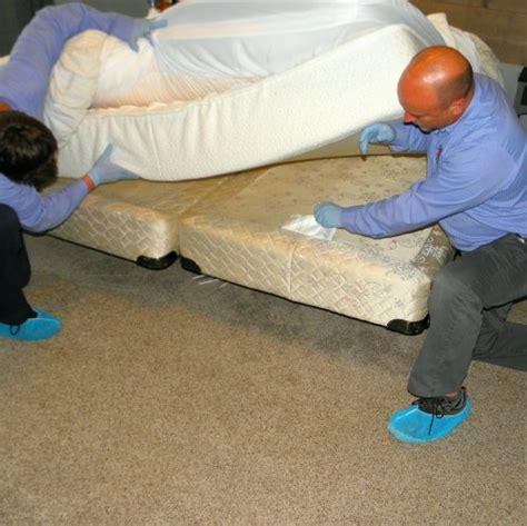 bed bug inspection bed bugs treatment bed bug sprays are a highly effective