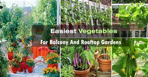 balcony vegetable gardens easy container vegetables for balcony rooftop garden