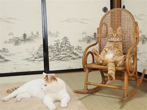 Cat Sitting In Chair by Kittens In Unison