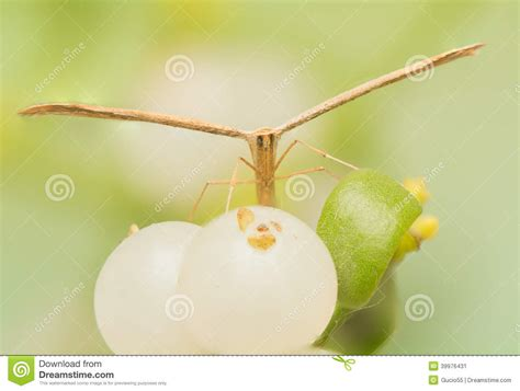 libro the natural world close up pterophoridae stock photo image 39976431