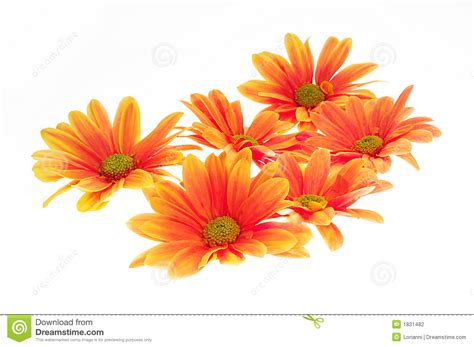 colorful flowers picture orange flowers in bloom light orange flowers stock photo image of floral green give