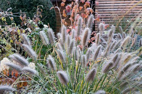 Garten Winterfest Machen by Muss Den Garten Winterfest Machen Winterfiter Garten