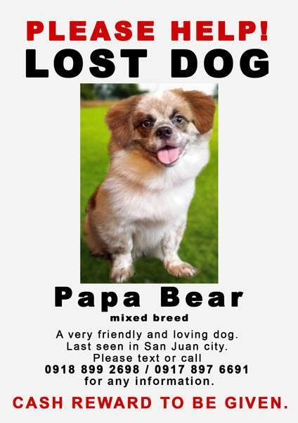 missing why dogs go missing and how to find them books cara welfare philippines 187 archive 187 finding papa