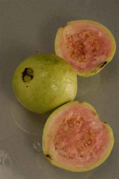 Obat Maag Tradisional Singkong buah jambu biji info kesehatan