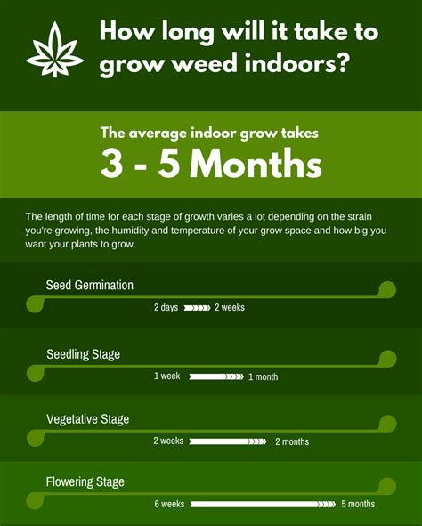 does hairline take longer to grow in after chemo growing weed indoors a beginners guide skunkology com