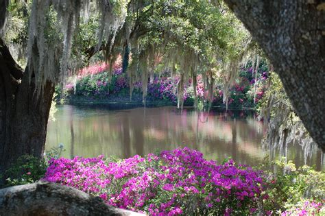 the beauty of the old southern gardens so southern pinterest