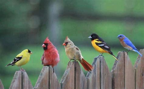 lcardinals finches and a blue bird nature pinterest