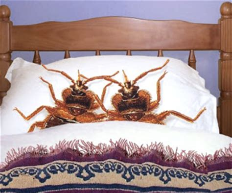 bomb for bed bugs kilohana k9s official blog store bought bed bug bombs