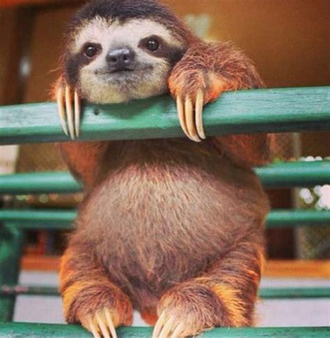 imagenes de animales adorables im 225 genes de animales adorables para descargar y usar como