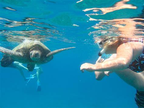 ta bay boat jet ski rentals ta fl pattaya yacht charters activities snorkeling