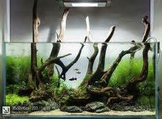 driftwood aquascape design large driftwood and planted aquarium aquariums