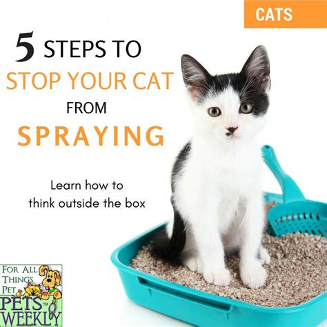 how to stop a cat from on the rug the definitive guide to stop cats from spraying
