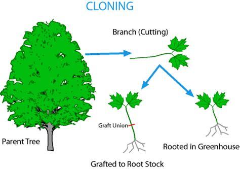 how do trees reproduce quora