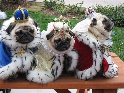 pug fashion pug costumes