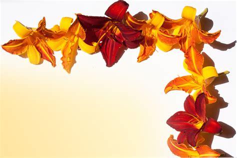 Kartu Ucapan Flower gambar menanam daun bunga musim panas jeruk merah