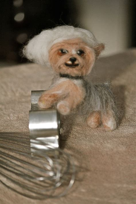 how to cut a yorkie s yorkie poo how to cut hairstylegalleries