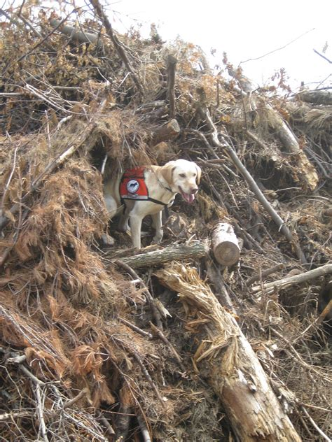 Thorough Search Canine Conservationists American Forests