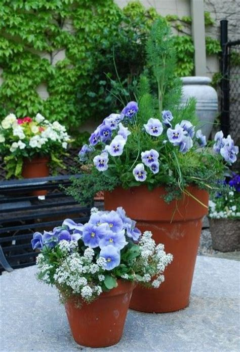 beautiful planters  flowers  herbs picturesjpg