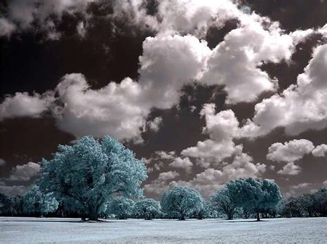 black and white pictures with color black and white photography with color splash nature www