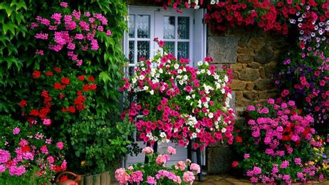 house with flowers farm house garden wallpaper flowers foliage