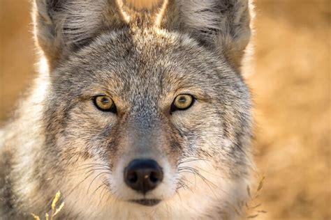 nature wildlife photography lenses nikon
