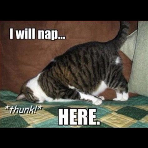 I Love Cats Meme - 45 best cat memes images on pinterest funny animals