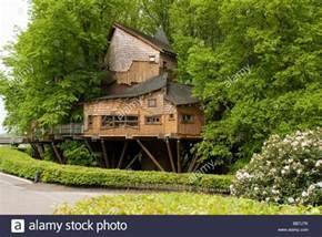 famous tree houses alnwick gardens famous tree house northumberland stock