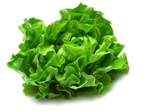 imagenes de hojas verdes solas mitos la lechuga por las noches retiene l 237 quidos
