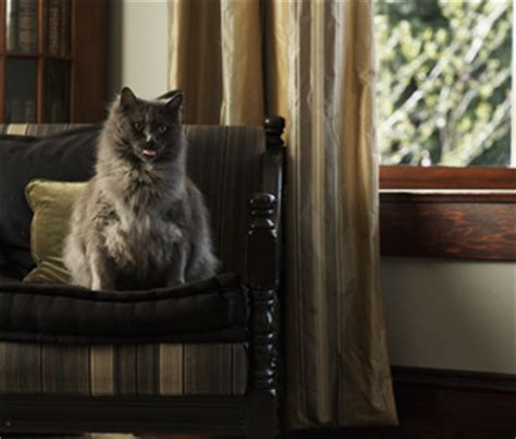The Living Room Or Not Cat Can An Allergic Person Live With A Cat