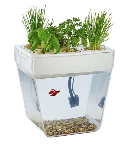 aquaponic garden system organic hydroponic growing