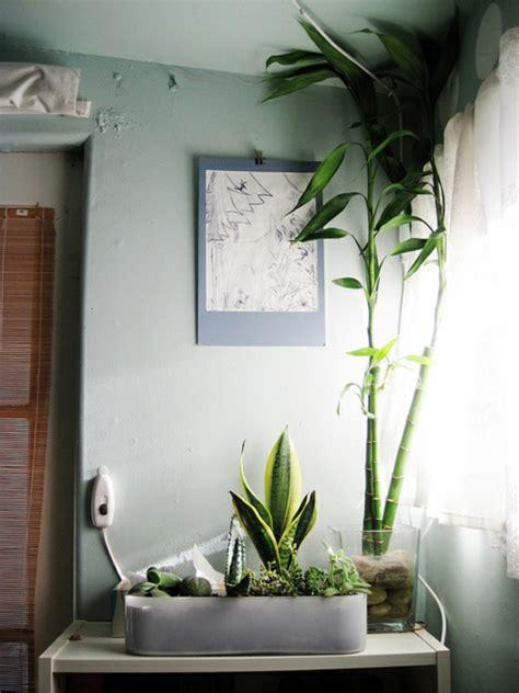 pflanzen im schlafzimmer es lohnt sich f 252 r sicher