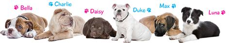 puppy finder websites names search find the name for your