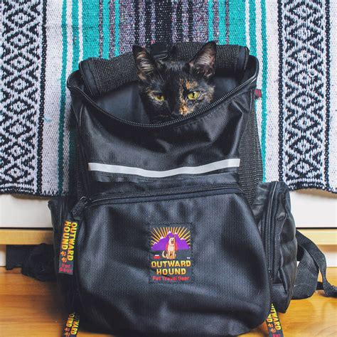 cat backpack what backpacks are best for cats adventure cats