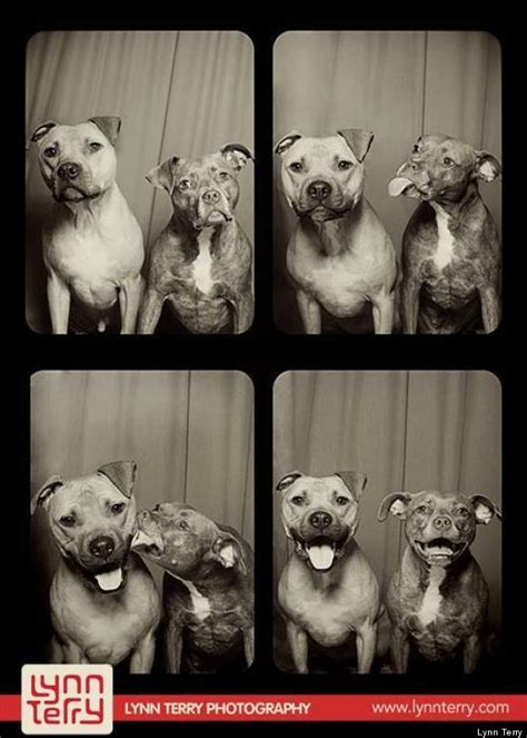 dogs in photo booth this is what happens when you put pit bulls in a photo booth huffpost