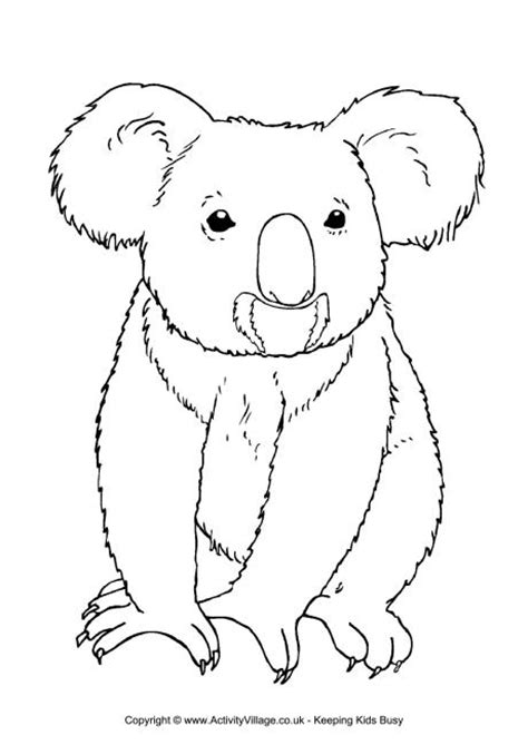Koala Colouring Page 3 Koala Template