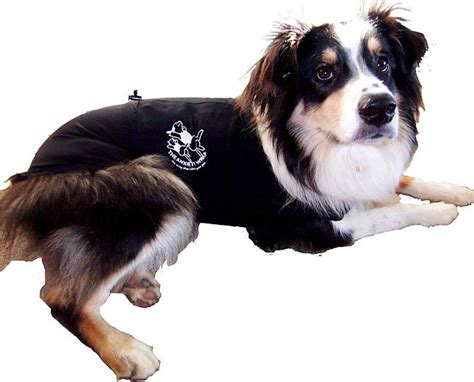 thunder jacket for dogs thunder jacket for dogs safe solution for anxiety